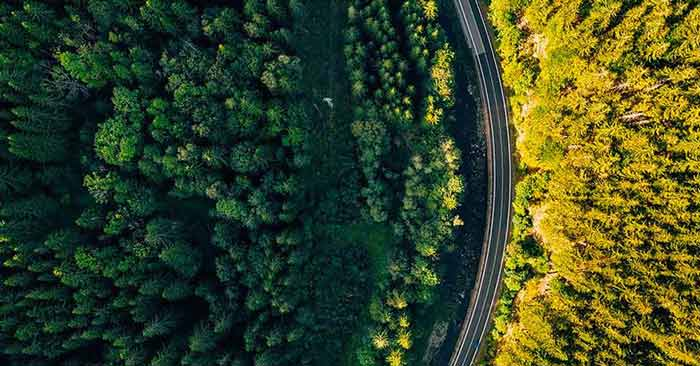 A road winding through a forest
